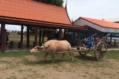 Thai-Farmers-demonstrate-Baan-Kru-Thani-1